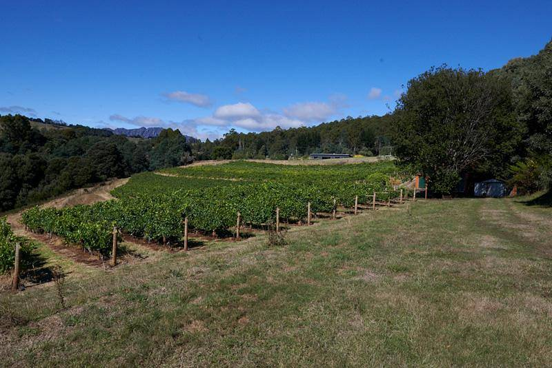 lake barrington vineyard and white rock vineyard