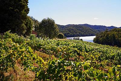 LakeBarringtonVineyard/077_pkp_lakebarringtonvineyard_1512360495.jpg
